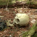 The-haunted-forest Aokigahara , Japan
