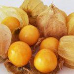 Fruits : Physalis