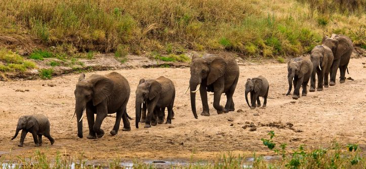 tanzania-tarangire-home-of-elephants