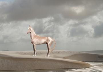 akhal-teke-horse