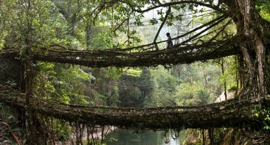 Living Root Bridges, India