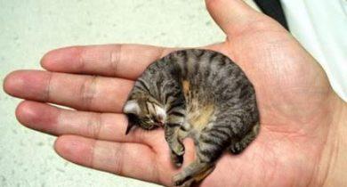 smallest-cat-infyworld