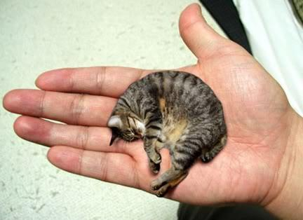 smallest-cat-infyworld