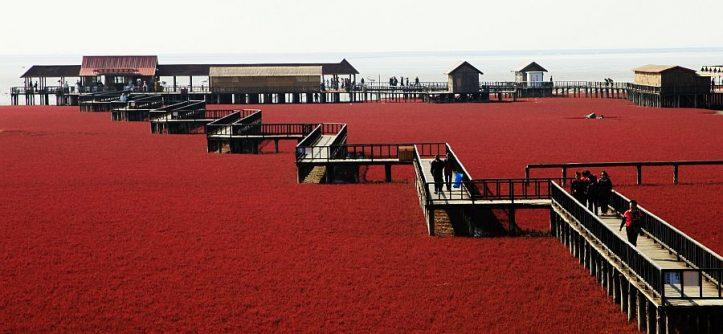 Red Beach, Panjin, China - Infy world